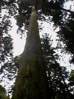 image/lulu-web-2006-09-23T18:36:44-1.jpg